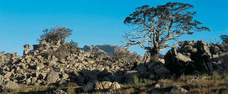Cedar Restoration Cederberg Conservancy South Africa